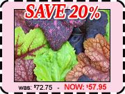 Shade Plants - 100's of new Hostas, Heucheras, Hardy Ferns, Shade Ground Covers, Hydrangeas & Shade Perennials.
