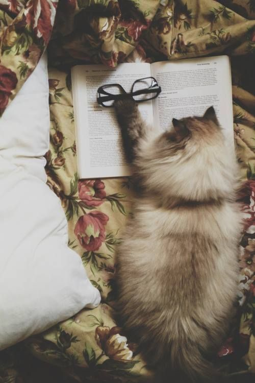 a cat with good taste in literature
