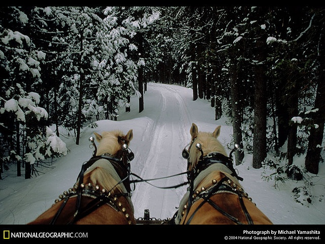 Really really really want to take a sleigh ride through the snow someday... it's on my WISH LIST!