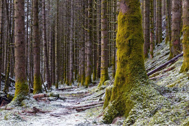 Frosty Forest by Eirik Sørstrømmen on 500px