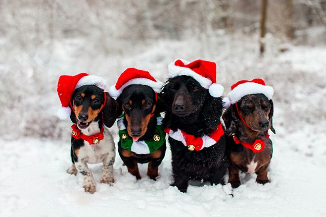Deck the halls with Santa paws!