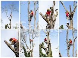 We provide services like Tree Risk Assessment, Cabling and Bracing, Storm Damage Response, Tree Removal & Stump Removal. We serve in Northern Virgnia over 15 years with reputation of top quality service at affordable prices. Contact us 24/7 days a week for a free estimate.
