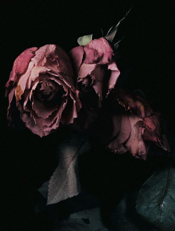 """""""Roses""""   by David Sims for Visionaire #40"""