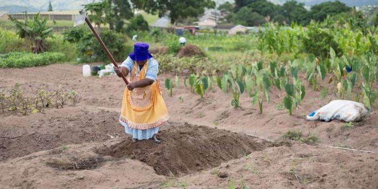 """Pourquoi la France sest retirée de la Nouvelle Alliance pour la sécurité alimentaire - Linitiative lancée en 2012 pour soutenir lagriculture africaine est accusée de favoriser les multinationales et laccaparement des terres.  Aucune réunion na cependant été organisée depuis 2016 et plus de cinq ans après son lancement les résultats ne sont pas au rendez-vous. - http://ift.tt/2Cf6q5H - \""""lemonde a la une\"""" ifttt le monde.fr - actualités  - February 12 2018 at 08:24AM"""