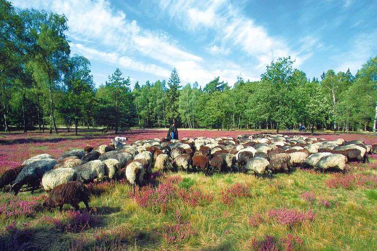 16 fantastische Naturerlebnisse in Deutschland – eines davon ist garantiert in deiner Nähe! – kleines.mitbringsel