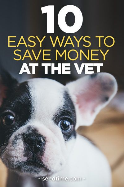 10 Easy Ways To Fix Your Door In Under An Hour: 10 Easy Ways To Save Money At The Vet