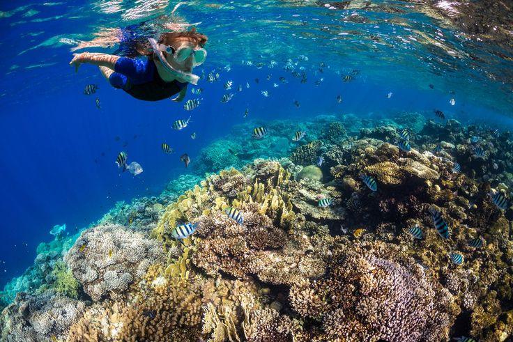 Ihr macht einen Urlaub in Ägypten und sucht Tipps für das Schnorcheln im Roten Meer? Ich zeige euch, was einen Ausflug unvergesslich macht!