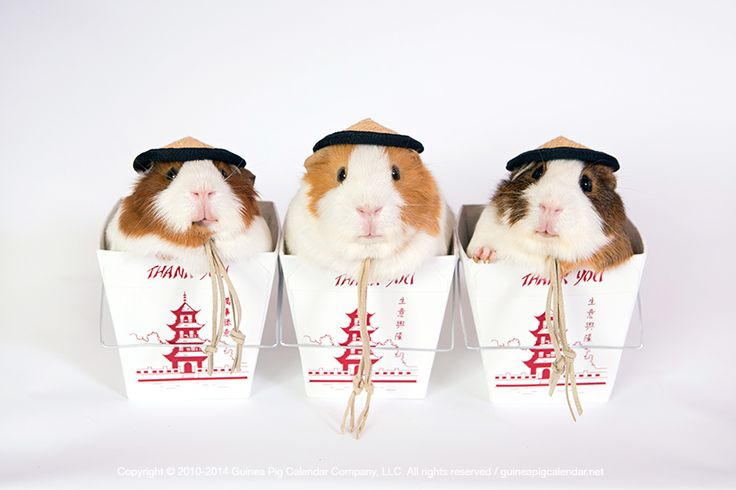 Happy Chinese New Year!!! {Year of the Sheep/Goat} ~ The Guinea Pig Calendar Company, for Smiles. #ChineseNewYear #YearOfGoat