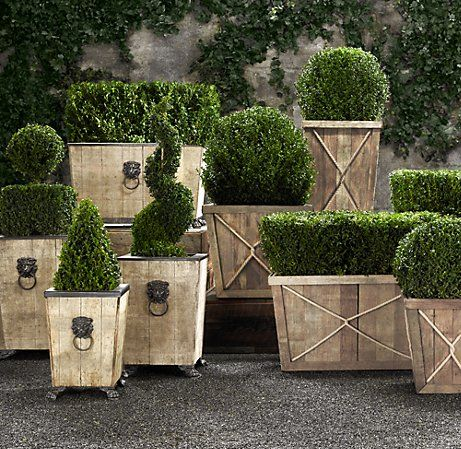 Mini boxwood in all kinds of shapes in planters