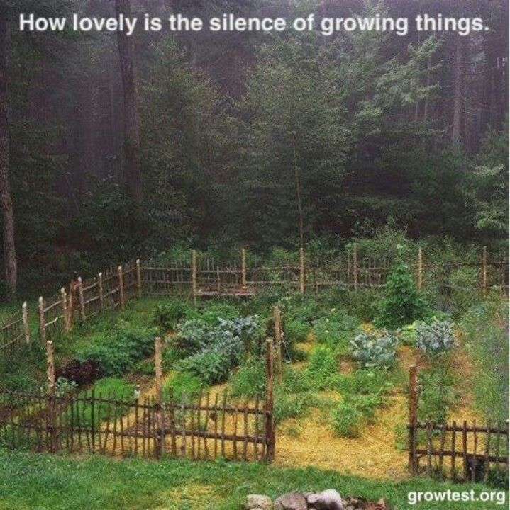 Herb Garden On Fence: 23 Best Images About Twigs & Things On Pinterest