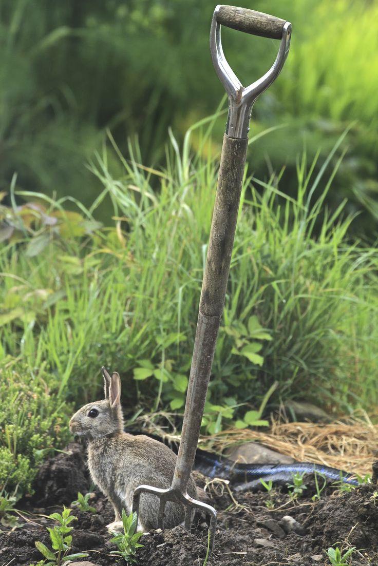 815 best art u0026 illustration bunnies rabbits hares images on