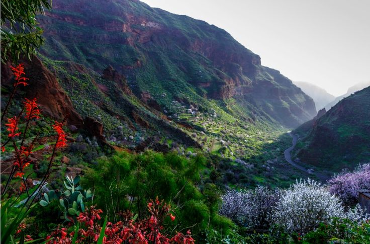 Barranco de Guayadeque, Gran Canaria- It is one of the most magnificent valleys on the island. Cacti, agaves, poppies, palms, Canary Island pines and almond trees, as well as more than 80 endemic species, grow in abundance on steep slopes. Also home to the biggest lizard species in the world, the Lagarto Canarión, this area is a paradise for serious walkers. #GranCanaria #GreatDestination