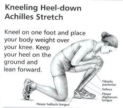Hi All and WELCOME to the next installment of 'Stretch of the Week' .This weeks stretch is different to previous weeks, the kneeling heel-down achilles stretch is excellent for people who have shin...