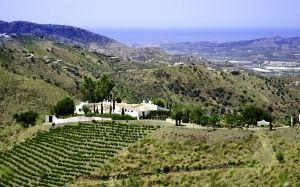 Luxury Villas in Andalucia, El Cortijo, View over Property