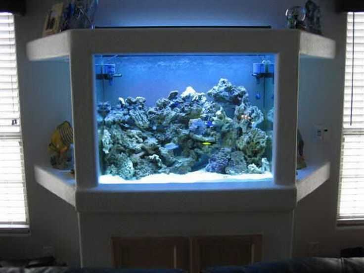 Aquariums saltwater fish tanks decoration ideas in house for Fish tank house