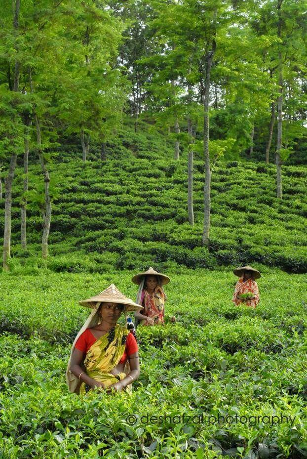Amar Sonar Bangladesh Natural Beauty