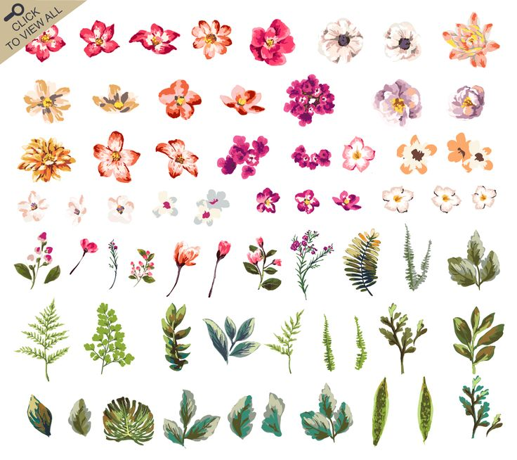 This pack includes -61 Floral elements -14 floral bouquets -15 wreaths 4 Illustrator EPS(10) files 30 PNG (300dpi) files How can you open and edit the files? You will need to use Illustrator
