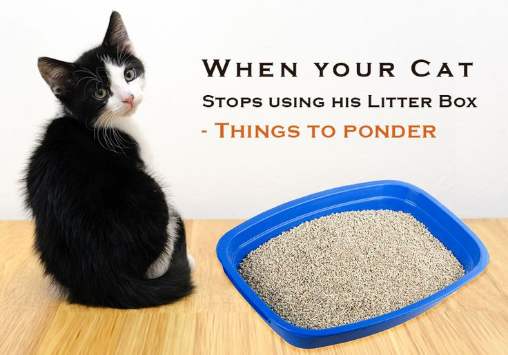 How I Dealt with My #Tabby when he stopped using the #LitterBox - http://goo.gl/BGBk2L #CatCare #PetCare