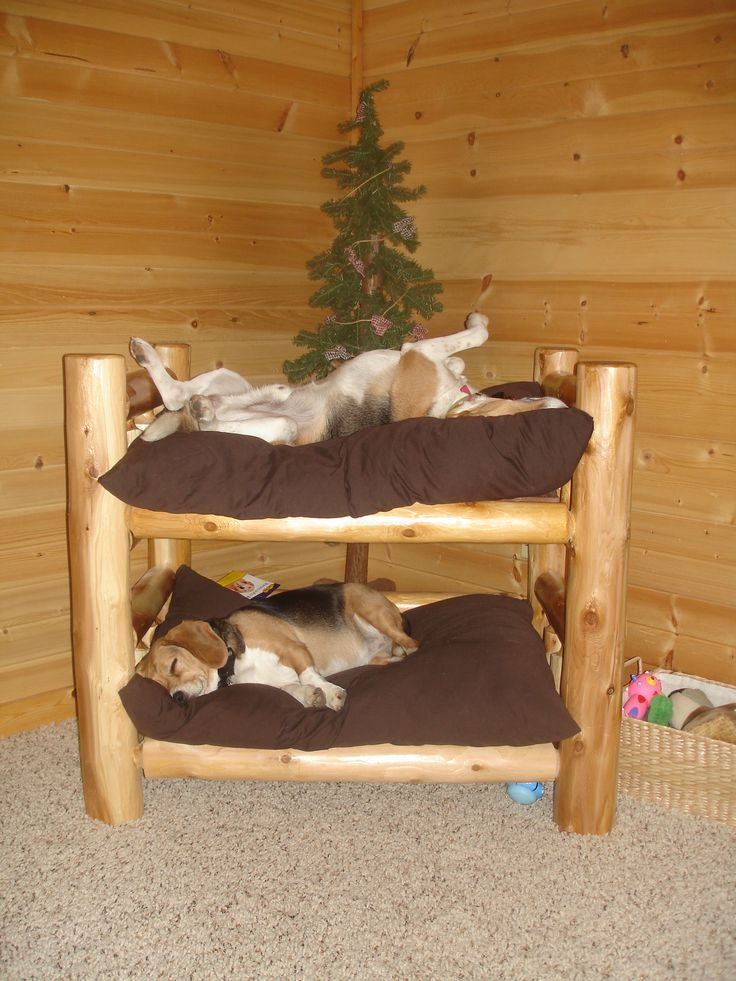 rustic log dog bunk bed now i just need a second dog. Black Bedroom Furniture Sets. Home Design Ideas