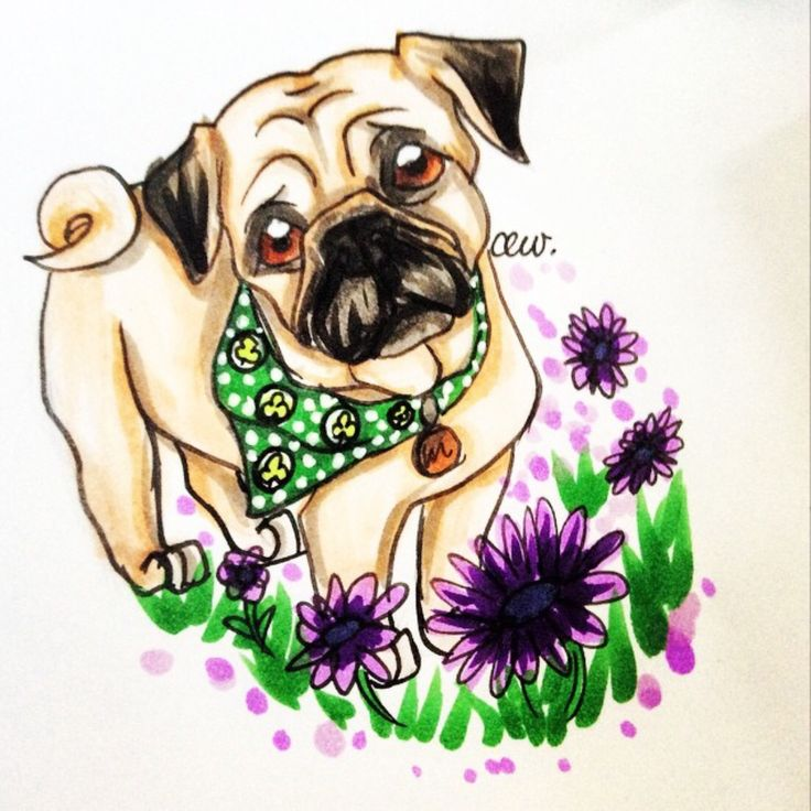 A cute commission for chickens friend. #cutie #pug