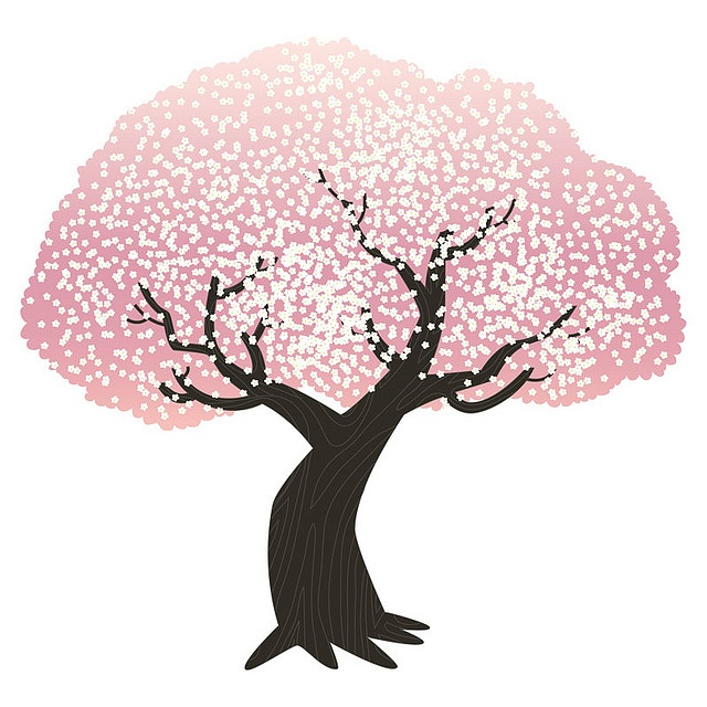 Blossom Tree Drawing: 17 Best Images About Cherry Blossom Trees On Pinterest