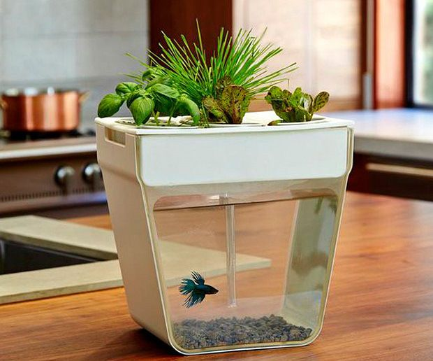 The aqua farm was created to be a self-cleaning fish tank that uses the fish waste to feed the plant while the plant cleans the water which grows you food! Get it at http://checkfancytech.com/aqua-farm/