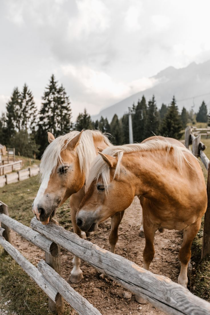 Italian horses  photo by @terumenclova