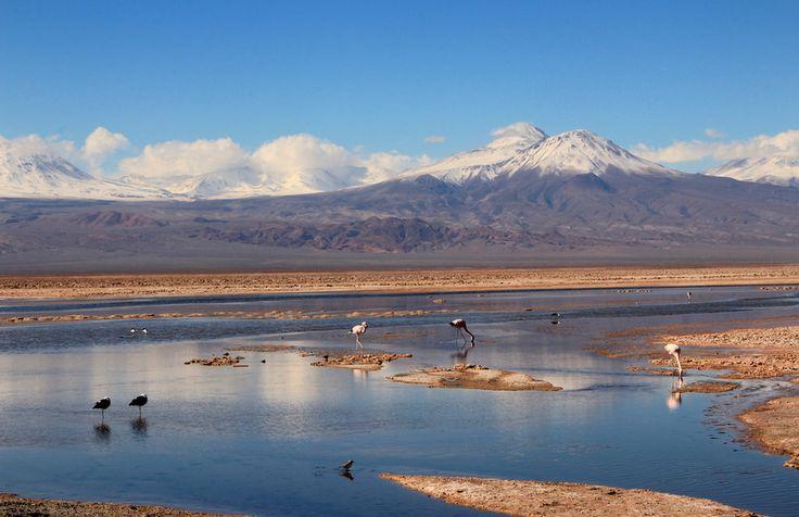 """O Deserto do Atacama é uma das regiões mais visitadas do Chile e conhecidas do mundo. Suas paisagens surreais misturadas com animais e plantas exóticos atraem visitantes do mundo inteiro que buscam explorar uma das áreas mais áridas do planeta.O Atacama, está localizada na regiãonorte do Chile, nafronteira com a Bolívia e Peru. É fácil...<br /><a class=""""more-link""""…"""
