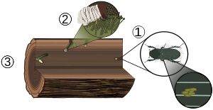 Powderpost Beetles In Your Firewood - Signs of Infestation - https://plus.google.com/103293216115361544888/posts/LVipGmxi6Gh