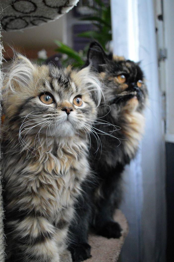 cat ♡                                                                                                                                                                                 Plus