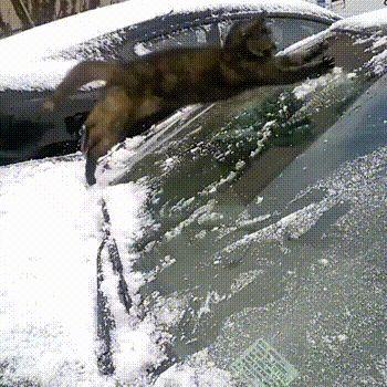 """Ganz neu für umweltbewusste Autofahrer: """"Cat - Eisfrei""""!"""