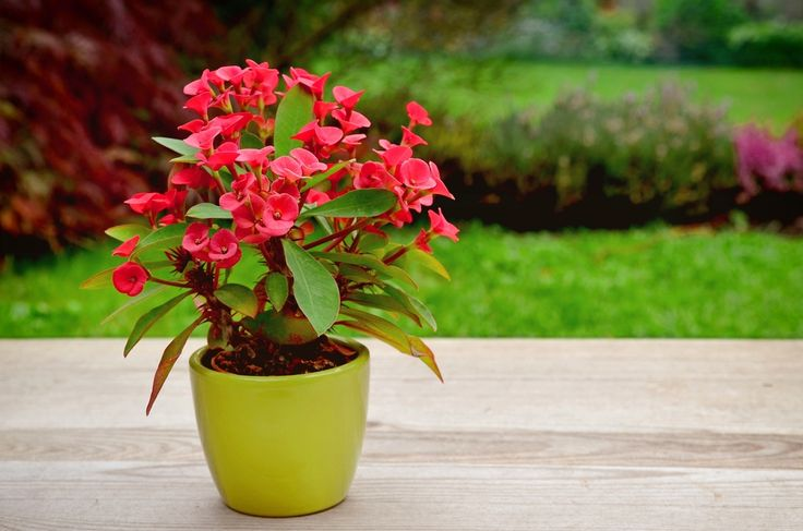17 best images about gardening such on pinterest for Easy garden plants to look after