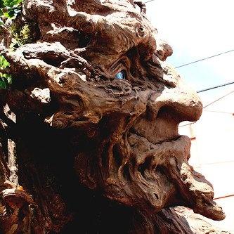 enchanted tree sculpture