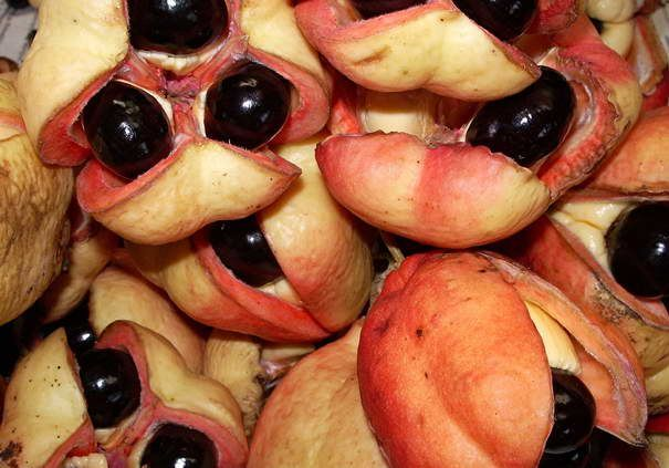 Top liste – Die seltsamsten exotisches Früchte der Welt | KunsTop.de http://kunstop.de/top-liste-die-seltsamsten-exotisches-fruechte-der-welt/ #Top #liste #seltsamsten #exotisches #Früchte #Welt #KunsTop