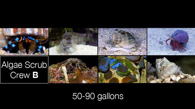 Buy Algae Clean Up Crew B: 50-90 gallon aquarium Online   Saltwater Aquarium Fish and Coral   Vivid Aquariums