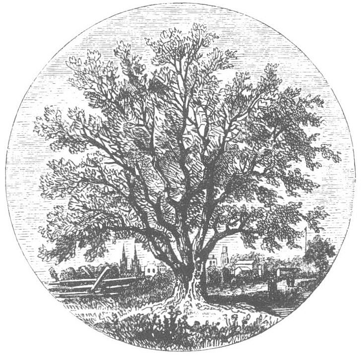 Apple tree. Lossing's Field Book of the War of 1812, Chapter II - Events in the Northwestern Territory.
