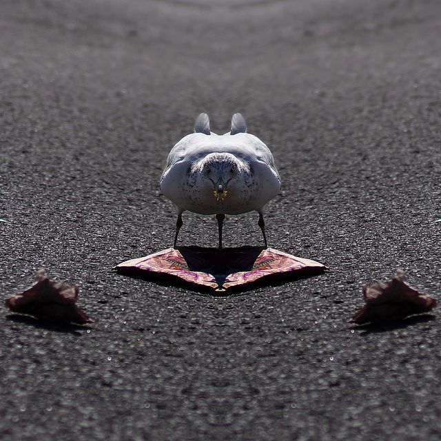 Mouette Siamoise, 365 days project, Martinez Manuel  http://ememphotographie.wix.com/photo