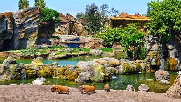 Berwisata ke Kebun Binatang Unik di Spanyol