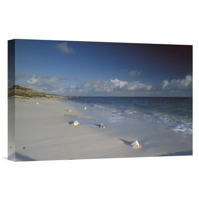 East Urban Home Turk and Caicos Islands Grand Turk Island 'Conch Shell on Seven Mile Beach' Photographic Print on Wrapped Canvas Size: