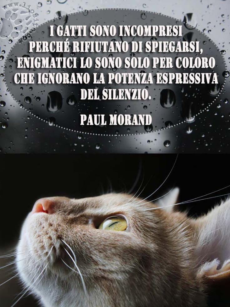 """Mi piace questa frase, sia in riferimento ai nostri amici pelosi, sia per quanto riguarda il potere del silenzio. """"I gatti sono incompresi perché rifiutano di spiegarsi, enigmatici lo sono solo per coloro che ignorano la potenza espressiva del silenzio."""" Paul Morand #paulmorand, #gatti, #silenzio, #poteredelsilenzio, #incompresi, #italiano,"""