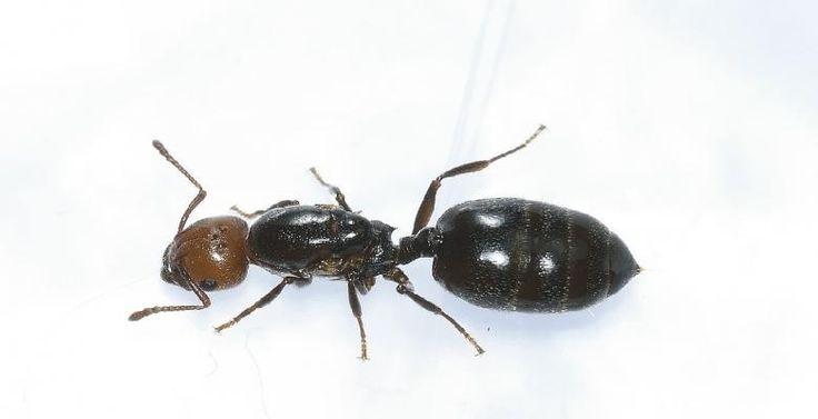 Problèmes de fourmis ? 7 façons de s'en débarrasser... Pour de bon! - Trucs et Astuces - Lesmaisons