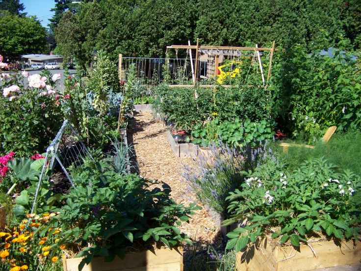 169 best French Potager Garden images on Pinterest Gardening