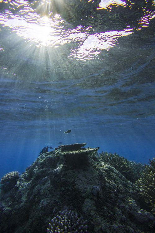 Underwater Sunrise Photo by Emanuele Del Bufalo -- National Geographic Your Shot