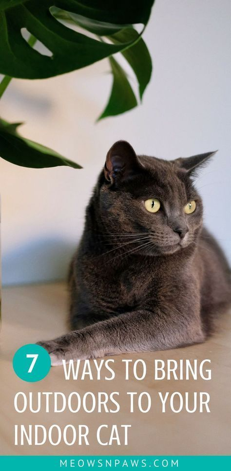 Outdoors To Your Indoor Cat