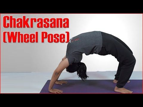 the chakrasana or urdhva dhanurasana is a backbend and