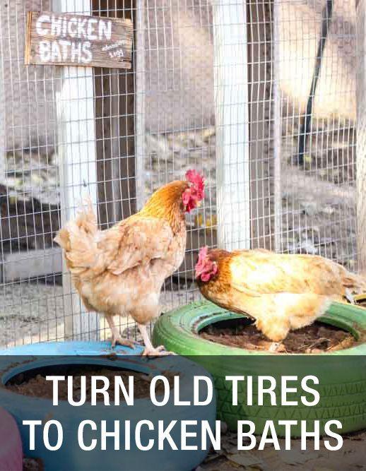 Turn Old Tires Into New Chicken Baths: http://www.mychickencoop.net/turn-old-tires-new-chicken-baths/ #backyard #chickens #diy