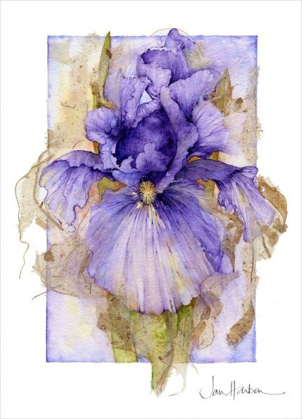 Jan Harbon.  Gorgeous! Purple Iris watercolor.   Can't you just feel the paper thin petals in your hand?