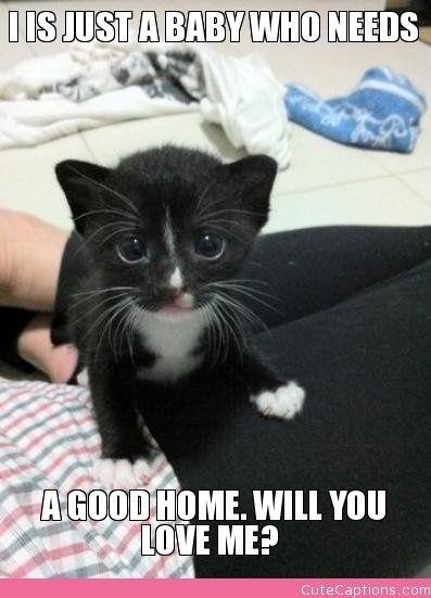 250 best funny stuff images on Pinterest | Funny stuff ...