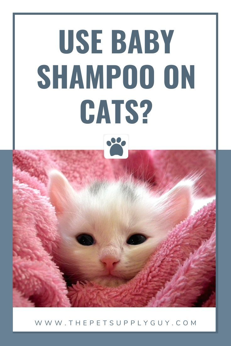 Can You Use Baby Shampoo On Cats The Pet Supply Guy In 2020 Cat Shampoo Cat Care Kitten Care