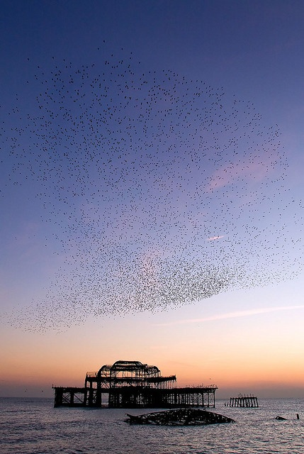 West Pier and Starlings Brighton 16th December 2007 | Flickr - Photo Sharing!